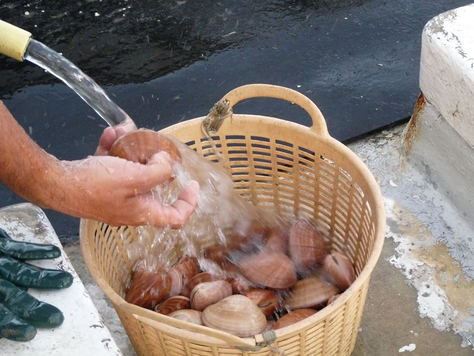 ¿Sabes por que nuestra Concha de la Costa es tan fresca?
